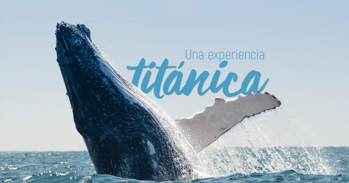 Avistamiento-ballenas1-695x364